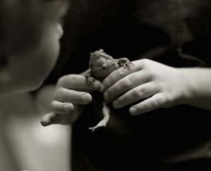 toad3-copy