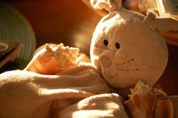 bunny-portrait-for-cc
