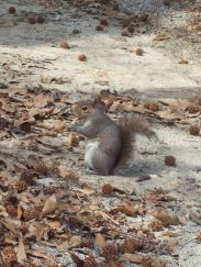 squirrelfriend2323091