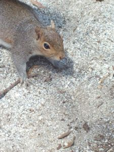 squirrelfriend332309