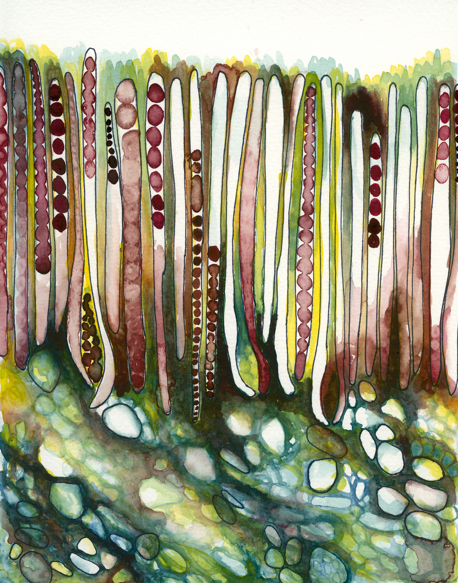 """Plant Cell Study One,"" by Kim Rohrs"